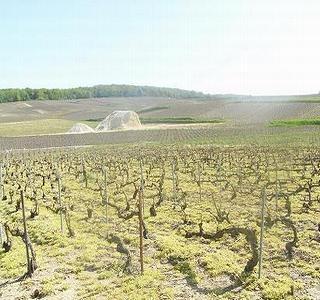 シャンパーニュ アンドレ・クルエの畑