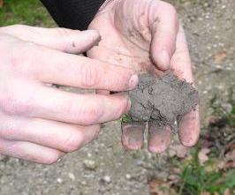 ヴァディアペルティの畑の土壌