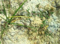 レ・ザマン・ドゥ・モンペラの土壌